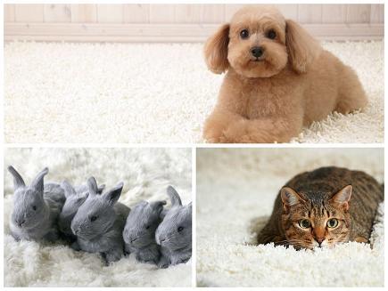 Karcher уборка шерсти животных